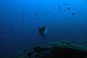 la-ciotat-23-24-juin-2012 8831